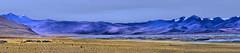Tso Kar, the Salt Lake of Ladakh - A Panorama (pallab seth) Tags: tsokarlake lake ladakh jammukashmir india autumn landscape mountains himalayas highaltitudelake morning wetlandconservationreserve nature naturereserve panorama