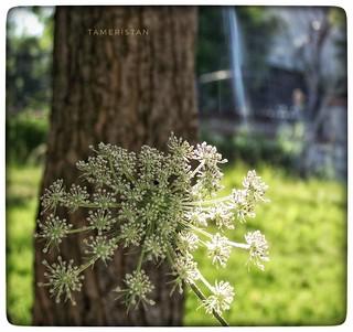 Flower on tree.