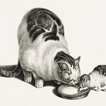 Illustration of domestic cat and kittens drinking milk from a saucer by Gottfried Mind (1768-1814). Original from Library of Congress. Digitally enhanced by rawpixel. thumbnail