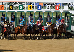 "2018-08-04 (22) r9 and they're off (JLeeFleenor) Tags: photos photography md maryland marylandracing marylandhorseracing laurelpark jockey جُوكِي ""赛马骑师"" jinete ""競馬騎手"" dżokej jocheu คนขี่ม้าแข่ง jóquei žokej kilparatsastaja rennreiter fantino ""경마 기수"" жокей jokey người horses thoroughbreds equine equestrian cheval cavalo cavallo cavall caballo pferd paard perd hevonen hest hestur cal kon konj beygir capall ceffyl cuddy yarraman faras alogo soos kuda uma pfeerd koin حصان кон 马 häst άλογο סוס घोड़ा 馬 koń лошадь gate start outside outdoors"