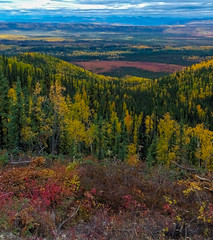 Yukon - Grands espaces (BLEUnord) Tags: yukon paysage landscape arbres trees espace space canadian canadien canada