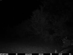 2018-06-24 05:13:39 - Crystal Creek 2 (Crystal Creek Bowhunting) Tags: crystal creek bowhunting trail cam