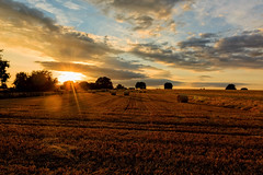 Golden Harvest (microwyred) Tags: wheat cloudsky nonurbanscene landscape sunset nature scenics land ruralscene goldcolored agriculture sun summer landscaped places outdoors farm landscapes sunlight sky yellow spennells field