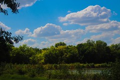 Clouds and Trees (katyearley) Tags: 55mm t6 rebel canon plants sun day bright clouds sky leaves summer blue green yellow trees