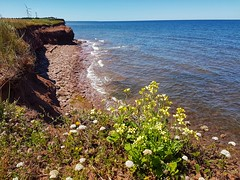Day 3 - North Cape (Bobcatnorth) Tags: princeedwardisland canada summer 2018 pei cycling bicycle touring bicycletouring camping sightseeing