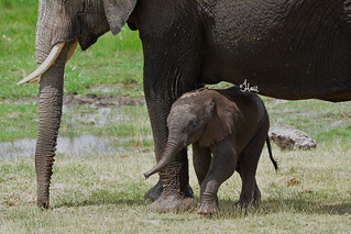 Happy World Elephant Day - 0631b+
