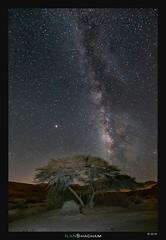 Milky Way Acacia (Ilan Shacham) Tags: milkyway night stars beauty nature acacia tree mars landscape view scenic fineart fineartphotography israel negev desert makhteshramon