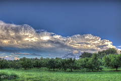 Storm Cloud (Pearce Levrais Photography) Tags: cloud cumulus thunder storm orchard apple plant canon hdr picoftheday photofotheday explore nh newhampshire