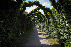 Time Tunnel (Ray Moloney Photography) Tags: ifttt 500px offaly birr castle couty ireland raymoloneyphoto hedge tunnel nature leaves green sky blue clouds white path hedgerow shadows
