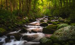 Golden Waters (ALP Images) Tags: gsmnp greatsmokeymountainnationalpark roaringfork gatlinburg stream water green cascades fujixt1