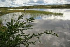 ved litje sverjesjø (KvikneFoto) Tags: natur landskap norge hedmark kvikne nikon1j2 fiske fishing