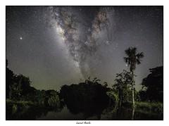 Panorama Voie lactée au-dessus du fleuve Kourou (Laurent Asselin) Tags: milkyway voielactée étoiles galaxie ciel nuit paysage landscape fleuve arbres nature guyane