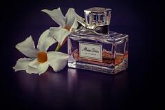 white 2 (Pepenera) Tags: white flower fiore fleur flowers profumo perfume parfum odor