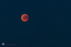 Total lunar eclipse, 2018-07-27, 22:54 (gerhard.wolff2016) Tags: abend blutmond borby eckernfoerde eckernförde lunareclipse mondfinsternis nacht ostsee schleswigholstein totalekernschattenfinsternis vollmond balticsea blauestunde bloodmoon bluehour deutschland de astronomie astronomy moon mond fullmoon totallunareclipse mars roteplanet roterplanet