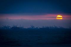 _MG_2434 (i D R O P) Tags: southbay longshoreman longshore shipping losangeles maritime seaside freight longshoremen ports clouds crane birds beach portoflongbeach sunsets sealbeach portofla longbeach sanpedro