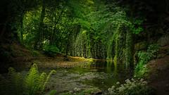 Deep forrest (A.Husvaer) Tags: uk saltburn green silence