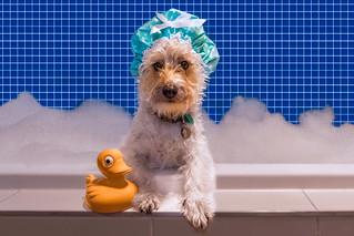 Rub-a-dub-dub... a dog in a tub