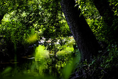 fgjhfg6uyfg (olegmescheryakov) Tags: moskva moskau russland ru keywords nature × wood forest park tree trees river water outdoor natural sun sunrise sunshine sunlight reflection mirror pond lake trunk lush green summer morning beautiful plant travel landscape shadows national woodland