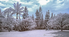 Sarmiento Lora Park Infrarred_7 (Luis FrancoR) Tags: sarmientoloraparkinfrarred7 infrared infraredview infrarrojo ngw ng ngc ngs ngd ngg tuluá