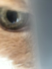 Cat's Eye (sjrankin) Tags: 17august2018 edited animal cat norio closeup blurry tooclose eye carrier catcarrier catcage vet vetclinic kitahiroshima hokkaido japan