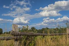 Münster 10082018 043 (Dirk Buse) Tags: münster nordrheinwestfalen deutschland deu nrw rieselfelder de germany natur nature outdoor himmel sky cloud wolken mft m43 mu43