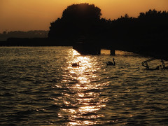 Sonnenuntergang (ingrid eulenfan) Tags: insel altefähr strelasund sonnenuntergang sunset schwan wasser licht canonpowershotsx260