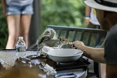 Squirrel in Washington DC (dckellyphoto) Tags: squirrel washingtondc washington districtofcolumbia dc 2018 canon canon6dmarkii nationalgalleryofart nationalgalleryofartsculpturegarden pavilioncafé