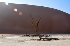 (Giulia La Torre) Tags: namibia africa nature wild travel traveling photography desert deserto namib sand deadvlei dead vlei trees sossusvlei storm landscape classic alberi landscapephotography africanlandscape