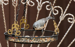 eenie meenie (Dotsy McCurly) Tags: nikond850 nikonafsnikkor200500mmf56eedvr bird tuftedtitmouse animal nature beautiful nj newjersey yard birdfood hangingbasket