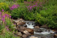 Mountain Stream (Amy Hudechek Photography) Tags: stream waterfall wildflowers fireweed mountains flower colorado summer amyhudechek nature landscape