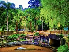 FRIM CAMPING AREA 343, Jalan Foxworthy, Institut Penyelidikan Perhutanan Malaysia, 52100 Kuala Lumpur, Selangor https://goo.gl/maps/ZcnnKG7f8Sq  #大自然 #nature #自然 #طبيعة #자연 #Alam #природа #ธรรมชาติ  #travel #holiday #traveling #trip #Asian #Malaysia #旅行 # (soonlung81) Tags: trip طبيعة kualalumpur natural 自然 วันหยุด vacanza путешествие malaysia resa vakantie 휴일 natuurlijk 馬來西亞 frim alam 旅行 reise 馬來西亞旅行 nature природа semester naturel naturale ธรรมชาติ asia natürlich 여행 asian voyage 大自然 reizen 度假 traveling urlaub 자연 ホリデー การเดินทาง holiday праздник natuur vacances fiesta viaggio 亞洲 viaje travel