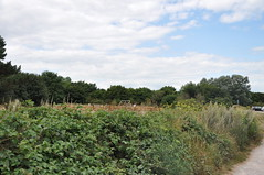 Pegwell Bay 1658 (Kent Country Parks) Tags: summer autumn spring pegwellbay country countryside kentcountryparks kent