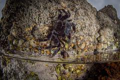 A coté de chez moi-2.jpg (barnibule) Tags: bretagne tide pool