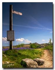 Footpath-To-Bonehill-Down (jeremy willcocks) Tags: footpathtobonehilldown dartmoor devon ukjeremywillcocksc2018 landscape colour bluebells signpost path stones haytor sun sunny wwwsouthwestscenesmeuk