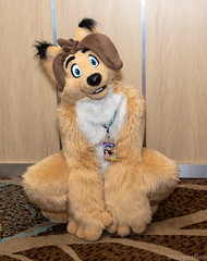 A Good Doggo (SnapperGee) Tags: 2018 anthro anthropomorphic blfc biggestlittlefurcon furry fursuit atimist foxclosetstudios zayfox dog doggo pup pupper mutt canine cute adorable ear ears cosplay costume happy