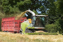 Claas Jaguar 870 Self Propelled Forage Harvester filling a Broughan Engineering Mega HiSpeed Trailer (Shane Casey CK25) Tags: claas jaguar 870 self propelled forage harvester filling broughan engineering mega hispeed trailer spfh whole crop wholecrop winterbarley winter barley knockanore waterford feed fodder county ireland irish farm farmer farming agri agriculture contractor field ground soil earth cows cattle work working horse power horsepower hp pull pulling cut cutting lifting machine machinery nikon d7200