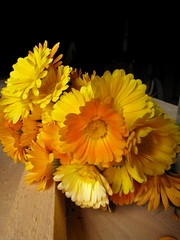 MARIGOLD CALENDULA OFFICINALIS (Patchwork Daily Desire) Tags: doonheritagevillage patchworkdailydesire diamonds spring scraps summer sky sun stars eggs antiquequilts arboretum crafts cozy cookies blanket garden green insects flower fabric forest museum k