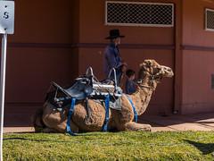 Camels at Australian Hotel Burke St Boulia Queensland P1030416af (john.robert_mcpherson) Tags: camels australian hotel burke st boulia queensland
