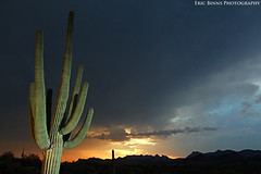 Behind the Storm (Eric Binns Photography) Tags: saguaro cactus sunset monsoon storm clouds arizona sonorandesert desert outdoors strobist offcameraflash garyfongamberdome landscape southwest outside sky
