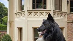 Schloss Evenburg (Jos Mecklenfeld) Tags: schlossevenburg loga deutschland duitsland garden garten tuin sonya6000 sonyilce6000 sony30mmf35macro sel30m35 totoro dutchshepherd leer niedersachsen germany de dutchshepherddog hollandseherder hollandseherdershond shepherd shepherddog dog herder herdershond hond