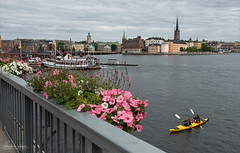 Stockholm, Sweden (Abhi_arch2001) Tags: stockholm sweden kayak canoe row rowing boat steamer skyline city bridge flowers architecture tower water yellow tandem