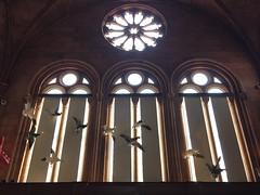 Washington, DC Smithsonian (A_Renee_88) Tags: washington dc smithsonian inside gallery library architecture awesome beautiful rose window stained glass vaulted ceiling birds stuffed ducks