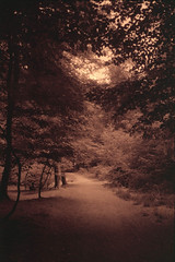 Forest of dreams (Rosenthal Photography) Tags: rodinal12520°c18min städte zeven color ff135 ahe juli mehde c41 20180805 analog asa200 olympus35rd sommer fujisuperia200 dörfer siedlungen forest deams forestofdreams path pathway way track trail trees summer mood july olympus olympus35 35rd fzuiko zuiko 40mm f17 fuji superia xtra rodinal 125 epson v800