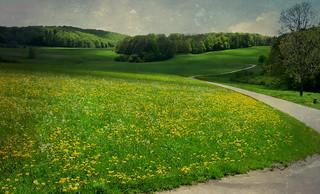 GERMANY, Schwäb.Alb , Wiesen oberhalb des Schopflocher Moores, 76258/10186
