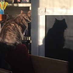 (rbarenblat) Tags: cat shadow