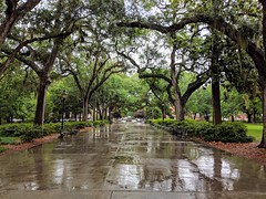 Forsyth Park - Savannah, Georgia (fisherbray) Tags: fisherbray usa unitedstates georgia chathamcounty savannah google pixel2 historicdistrict nationalregisterofhistoricplaces nrhp 66000277 forsythpark