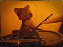 Drumming Wolfi (WolfiWolf-presents-WolfiWolf) Tags: wolfiwolf wolfi wolf wolfismus dirigent derprächtigste dirigierendster dirigat derschönste dereinzigartigste drums drumming schdeckerl schlägel tom tomtom snaredrum music multiversen multiverses majestic marieschen master hören musik liebe love armani blau butlers conductor creator composition eneamaemü farky fresko glück himmel hungary ibindaslicht jazzinbaggies jazz meinemajestät kleinewolfis kunst kaffeesatz licht meditation nass naturwunder neindashabensiediesmalnicht öhrchen poem quantensuppe reise stüben tanz universum vollmond werwolfi explorant eyes zeigen rimshot
