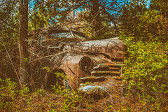 If It's In Your Head (Wayne Stadler Photography) Tags: chevy preserved overgrown retro vintage rustographer abandoned classic derelict vehiclesrust rusty junkyard georgia oldcarcity rustography automotive white