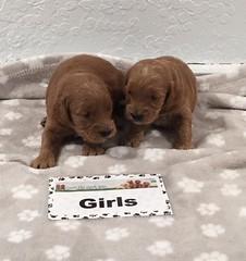 Gretta Girls pic 4 8-11