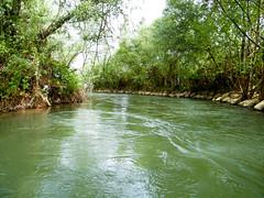 The Jordan River, Israel (iliya.hazan) Tags: travel river plants color quiet forest nature trees green landscape jordanriver israel flow